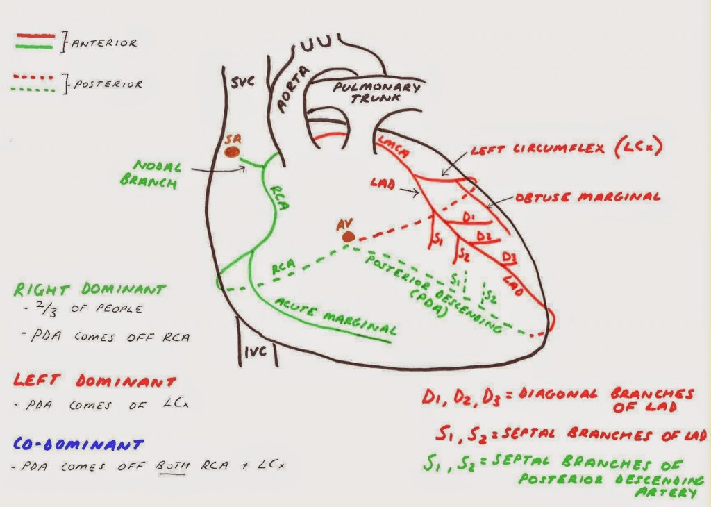 heart-diagram