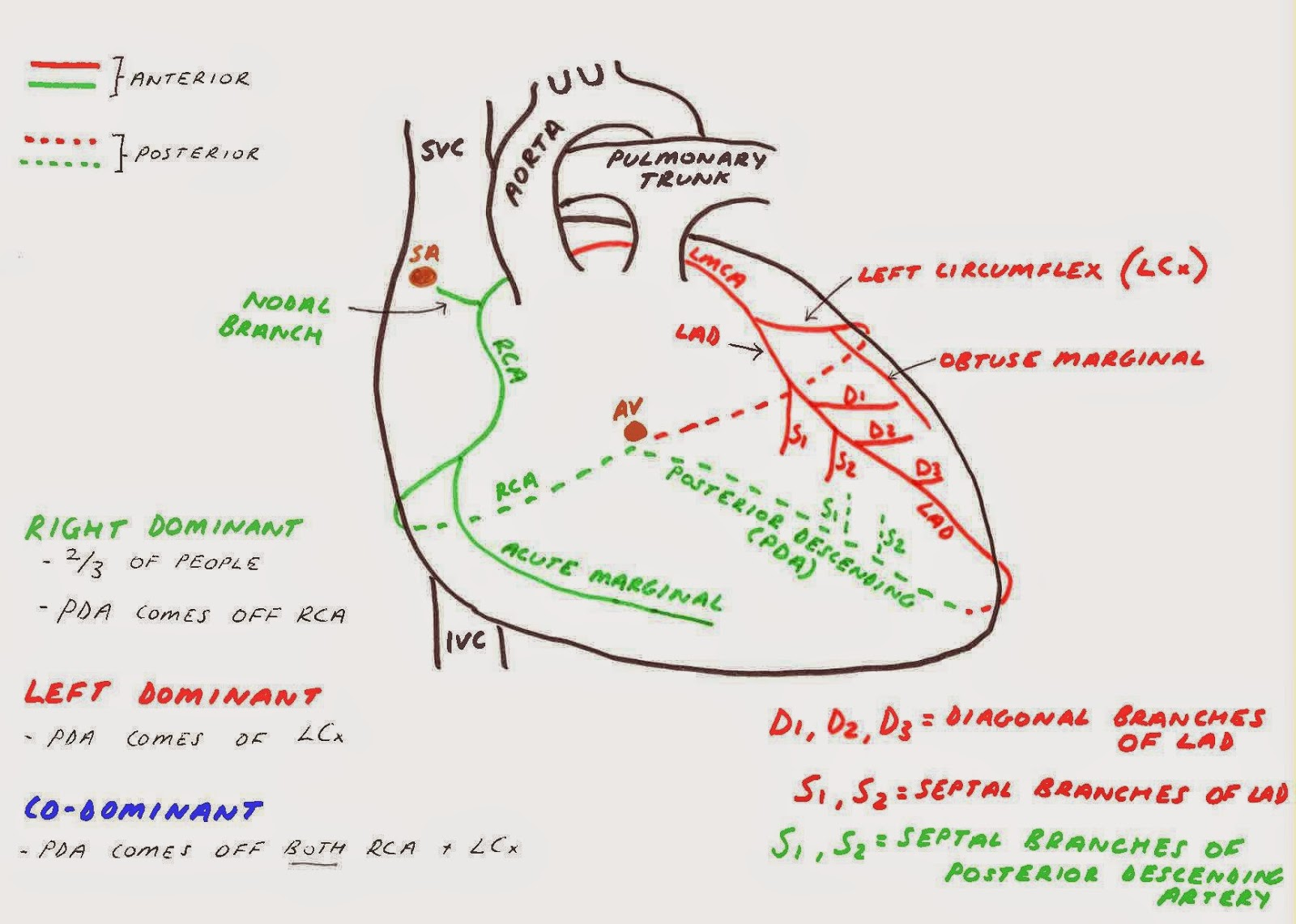 Hunting the Culprit 2: Coronary Artery Anatomy - Ponder Med