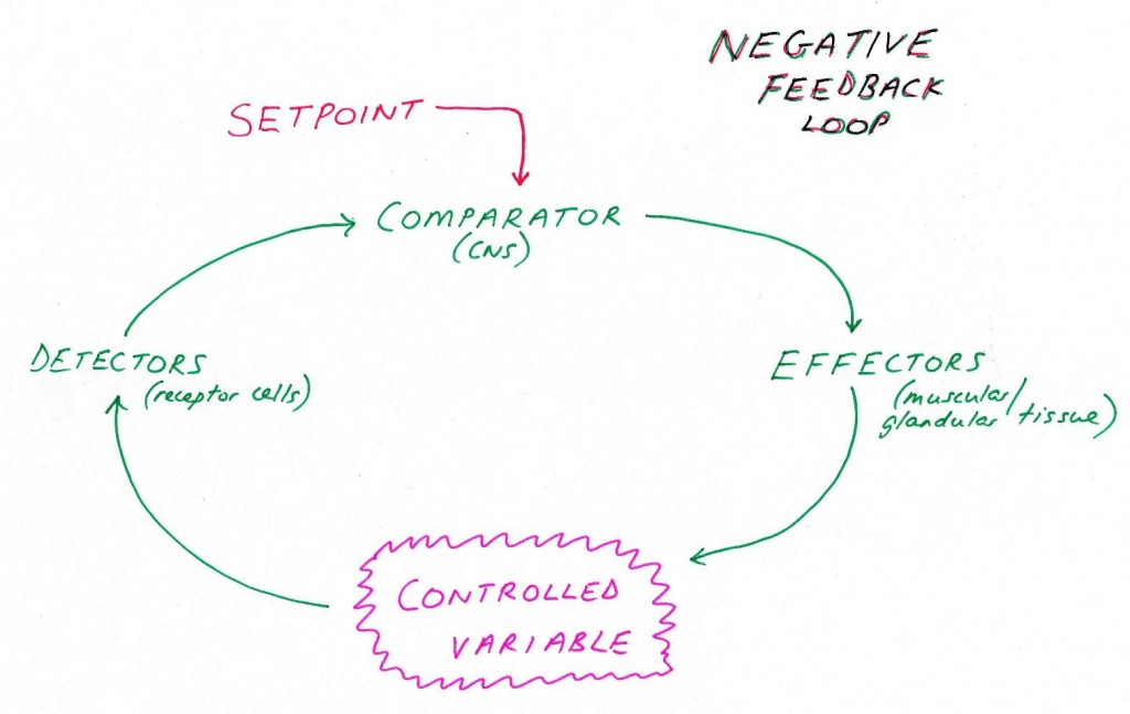 Neg feedback loop-page-001