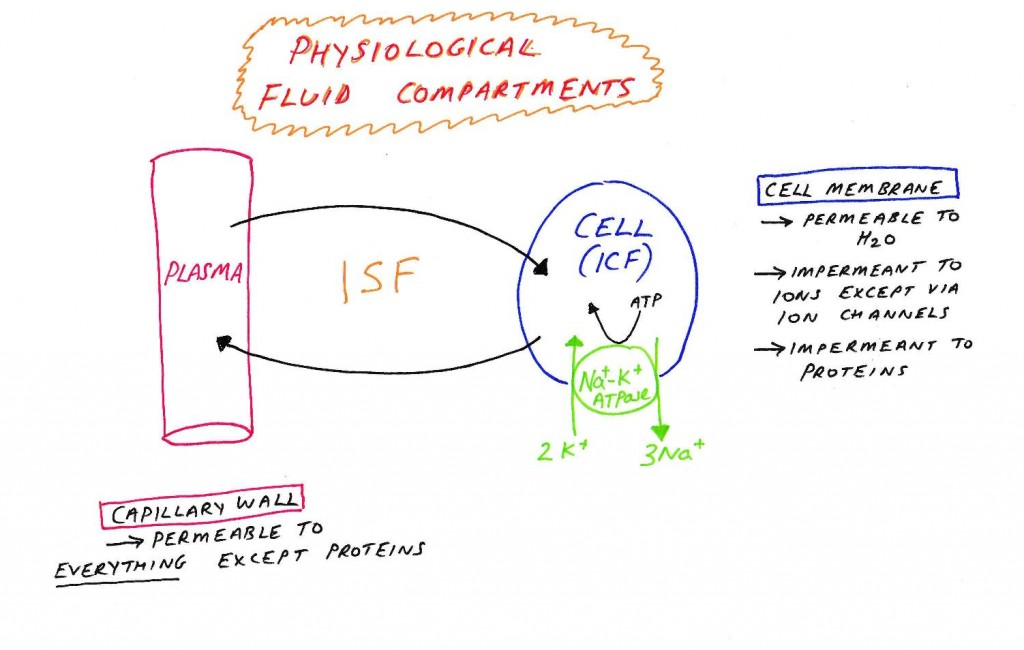 Phys fluid compartments-page-001