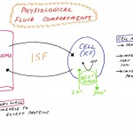 Basic Cellular Physiology: Fluid Compartments